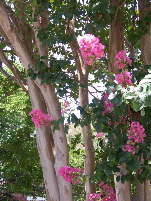Beautiful flowering trees and shrubs all along the way.