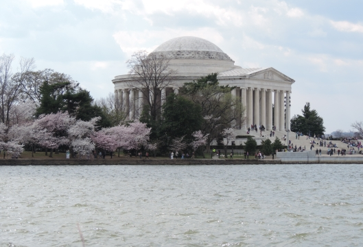 cherry blossoms with people, then...