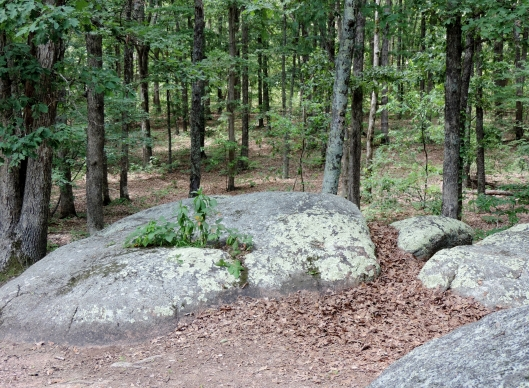 At the end of the day, Elephant Rocks State Park is a great walk in the woods!