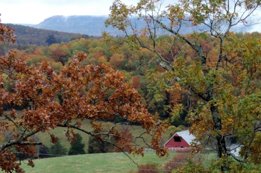 On our visit to the Buffalo River in 2013, we rented a cabin in the mountains. This was the view off our back porch...