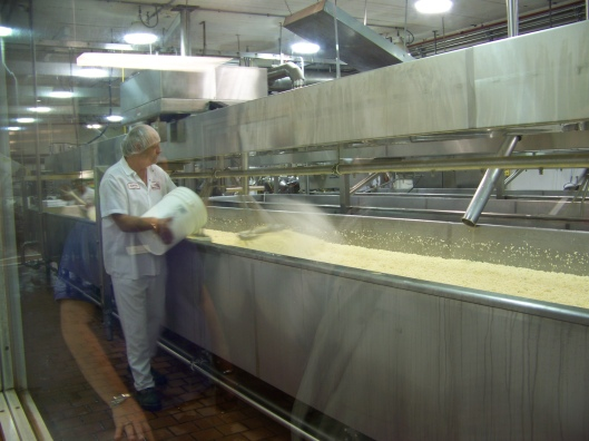 Watching salt being added to the curds at Cabot Cheese.