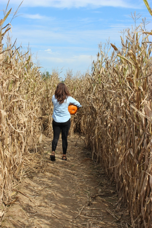 Our grandaughter in the maze at the pumpkin patch.