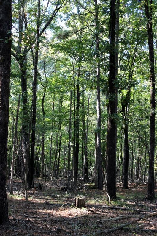 A walk in the woods at Cane Creek State Park is fun and invigorating.