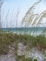 We have been to the Gulf of Mexico several times. We love walking along the beach.