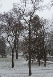 And then, finally, on Sunday afternoon, the snow began to fall...