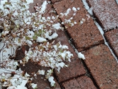 ...a beautiful wet snow, that clung to everything it touched.