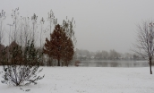I returned to the park...it was a beautiful white wonderland. I loved the way the fog lay low on the water.