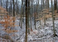 I love seeing the first snowfall of the year. We caught this one in Indiana, at Turkey Run State Park.