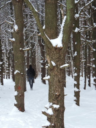 We traveled to our son's house in Michigan last year and went on a hike in the woods on a very cold day...