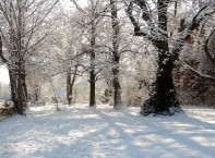 I love walking in our neighborhood after a good snowfall...and in south central Missouri, a good, heavy snowfall is really special.
