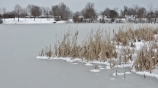 cattails by another lake...
