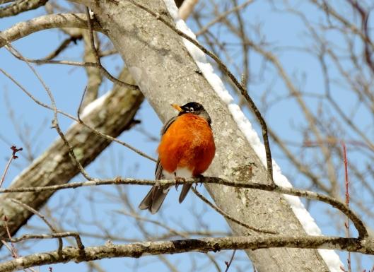 Robins...I saw so many