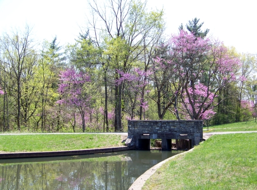 Redbud trees at Shaw Nature Reserve.