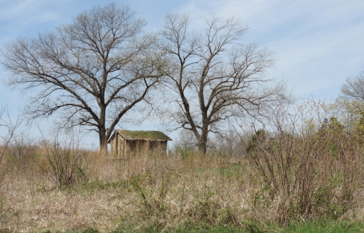 There is an old sod house in the reserve. RIght now the grass is just starting to grow again on the roof.