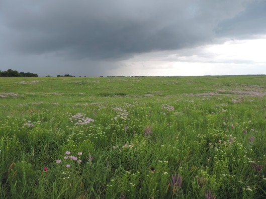 Watching a storm come to the prairie is a spectacular experience.
