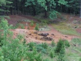 The red rock of the iron pit at Meramec Spring Park.