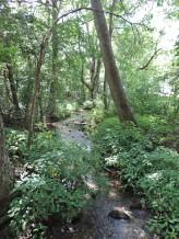 Carver Branch Stream