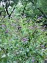 prairie flowers...