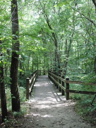 A boardwalk leading though the wetter parts of the forest along the mile long Carver Trail...