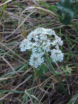 and Yarrow.