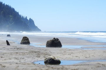 Petrified stumps of ancient sitka spruce along the beach at Neskowin.