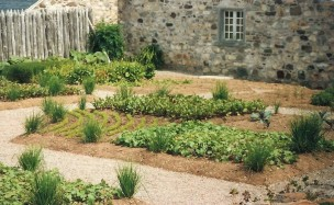 A typical colonial herb garden