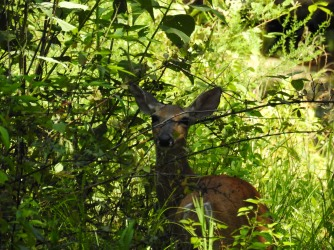 Came upon this deer that was hiding in the understory.