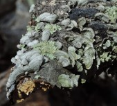 I love mosses and lichens...