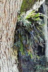 Epiphytes growing in so many of the trees...